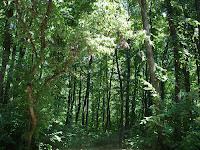 Hutan sebagai penyerap karbon dan Perdagangan Karbon (Carbon Trading)