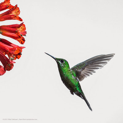 How Will Google Hummingbird Change SEO
