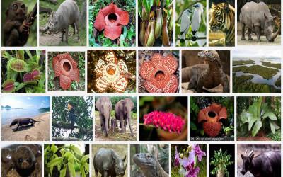Lindungi Flora dan Fauna Indonesia