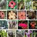 Ayo, Lindungi Flora dan Fauna Indonesia