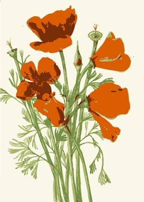 orange poppy group