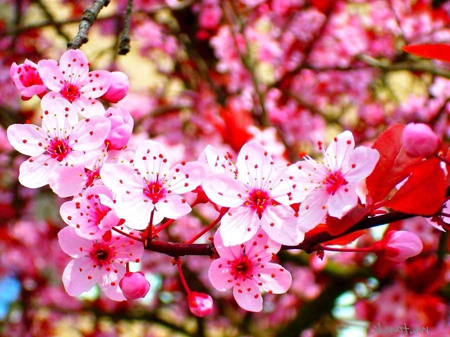 Gambar Bunga Cantik Dan Indah Sealkazz Blog