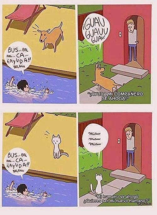Por eso un perro es tu mejor amigo