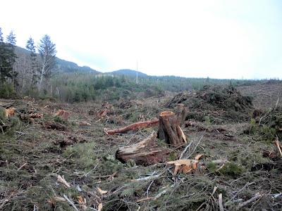 photo of a clear cut forest taken by MeetGreen
