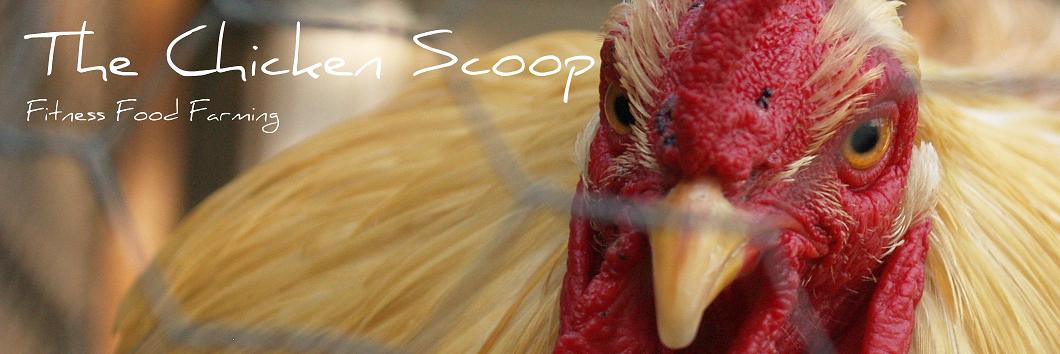 The Chicken Scoop