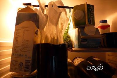 silduk med färskost i vardande, upphängd i kylskåp. foto: Reb Dutius