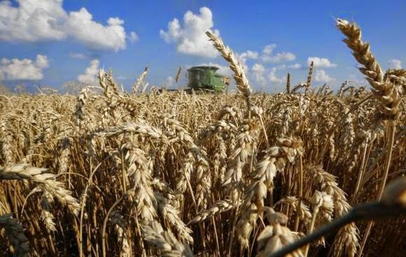 http://in.reuters.com/article/2014/08/18/us-usa-wheat-scab-idINKBN0GI0AS20140818