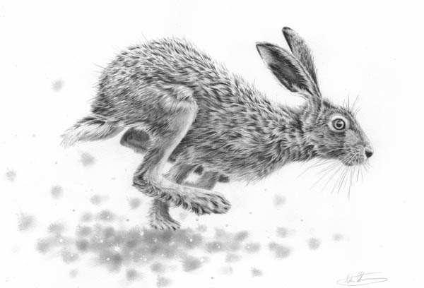 Hare running drawing - photo#6