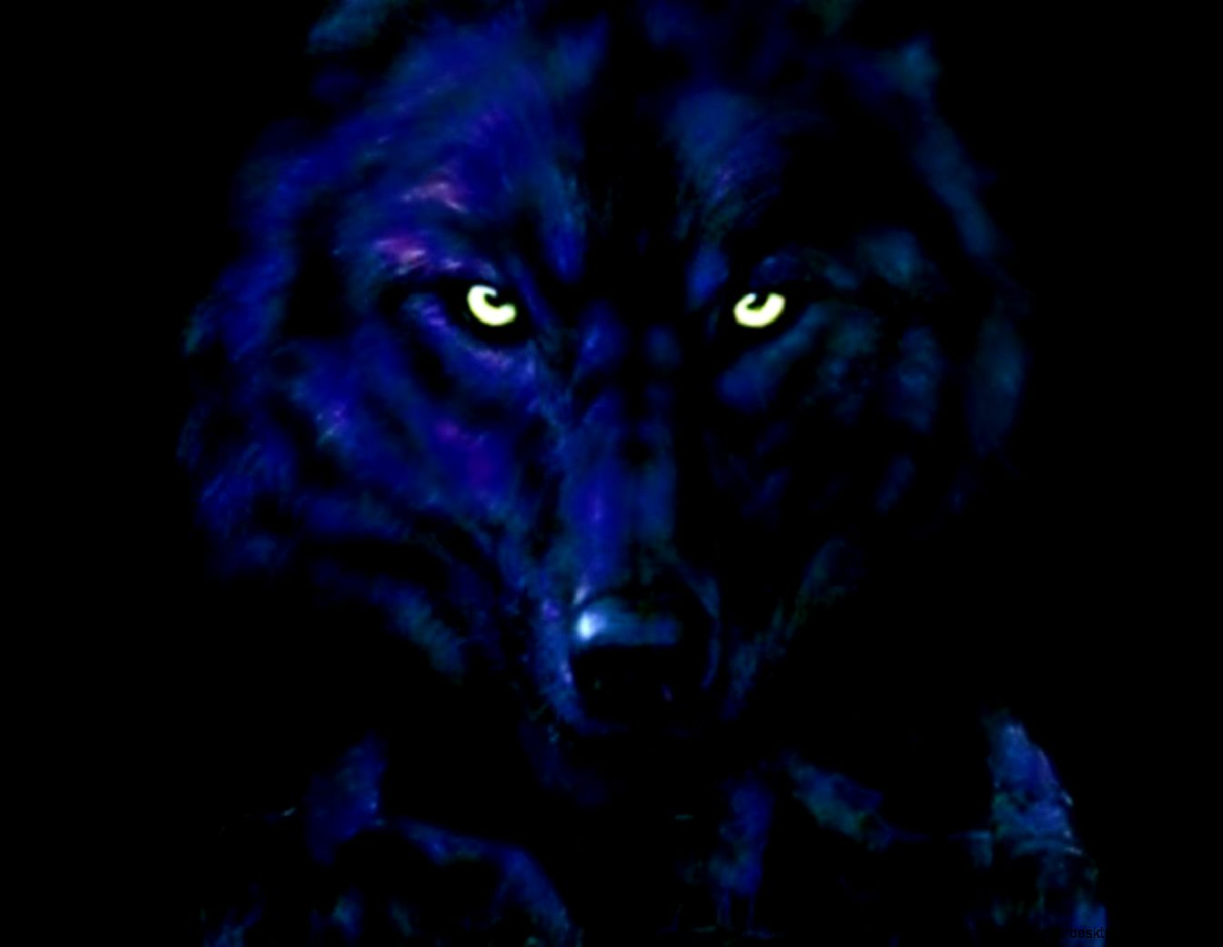 Top Wallpaper Abstract Wolf - the-black-wolf-hd-wallpaper-55508-hd-wallpapers-abstract  Snapshot_428798 .jpg