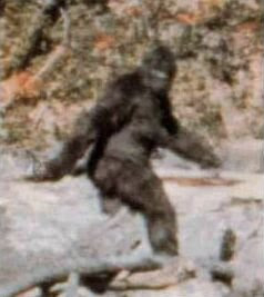 Still image from a short film made in 1967 by Roger Patterson and Robert Gimlin, showing what appears to be a person in a gorilla suit walking in some woods