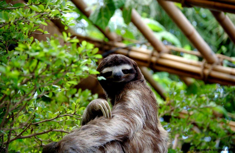 Rainforest Saviors How Animals Become Endangered