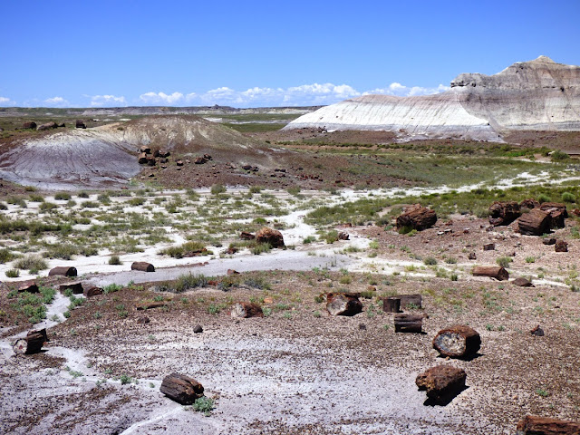 petrified forest natl pk latin singles Issuu is a digital publishing platform that makes it simple to publish  san pablo bay natl wildlife refuge  plan to stop in 4100 petrified forest rd,.