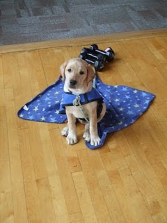 Picture of Toby when he was 9 weeks old; he's in coat inside the YMCA