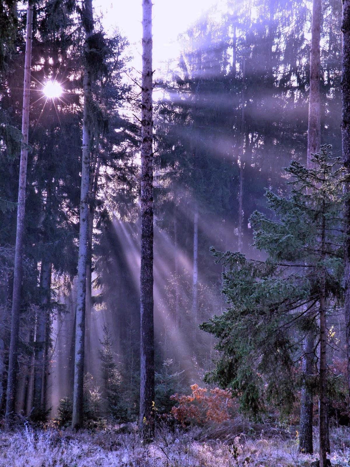 Lesní sluníčko