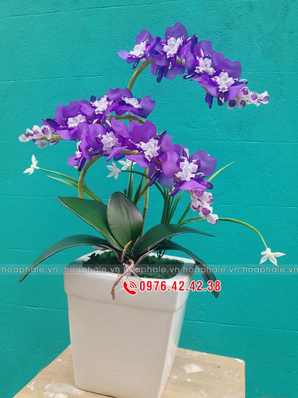 Mẫu hoa phong lan tím - hoa pha lê