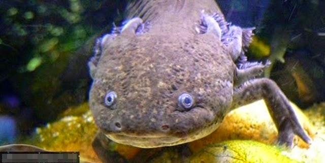 foto ikan misteri