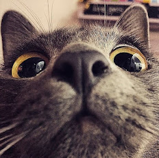 Приколы про кошек :)