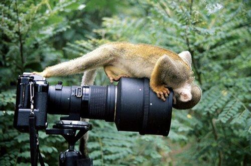 inan%25C4%25B1lmaz+hayvan+resimleri14 İnanılmaz hayvan resimleri vahşi hayat.