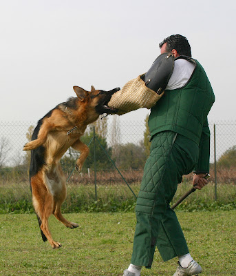 training-for-dogs-that-bite