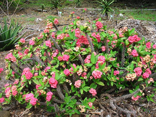 arbustos peque os colecci n de hojas y flores