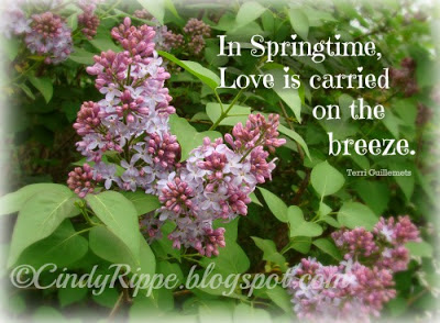 Lilacs, Song of Solomon 2-11-13, The scents of Spring, Love quote, Terri Guillemets quote, Florals-Family-Faith, Cindy Rippe