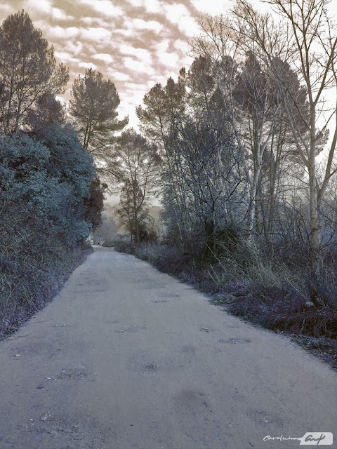 camino-paralelo-al-rio-ripoll