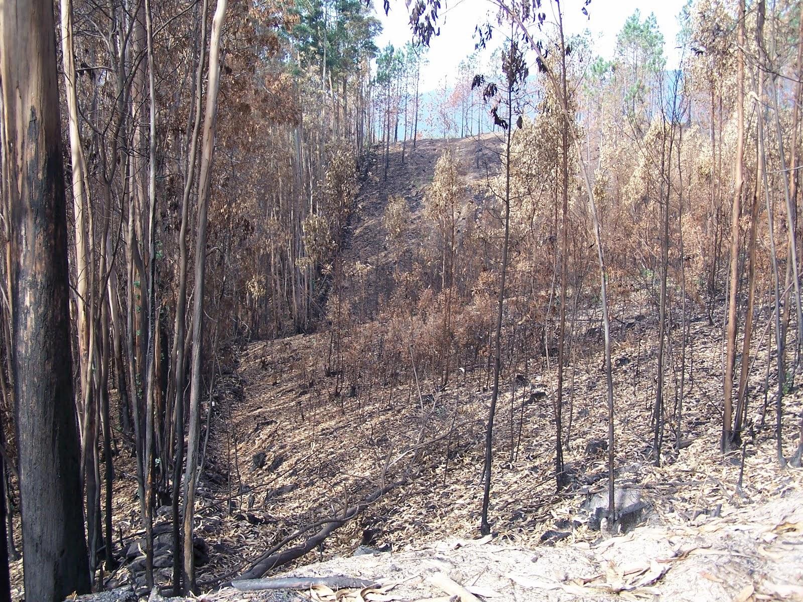 Paisaxe queimado na comarca do Rosal