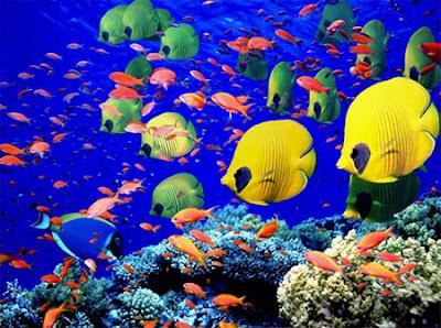Ecossistemas aquáticos - Características, comunidades e classificação