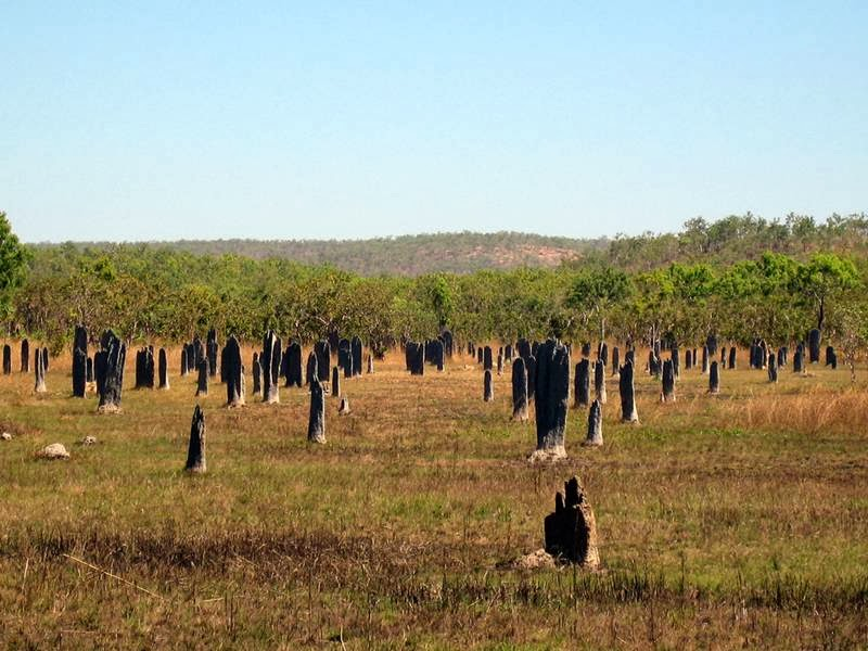 Magnetic termite mounds in Australia