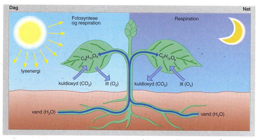 hvor foregår respiration
