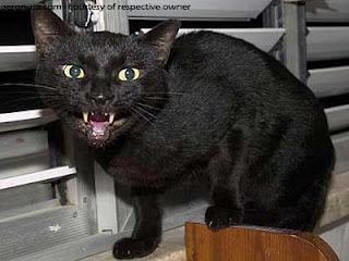 Tahukah Anda, Mengapa Kucing Hitam Identik dengan Simbol Magis?
