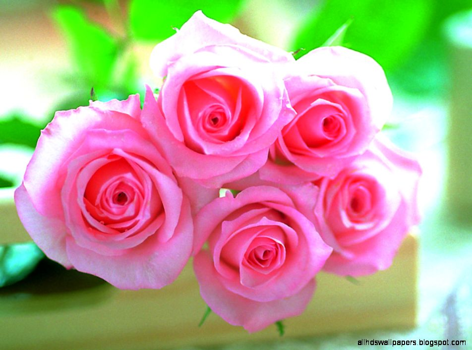Pink rose flowers wallpapers free download for mobiles all hd view original size download wallpaper pink roses flowers flowers image source from this mightylinksfo