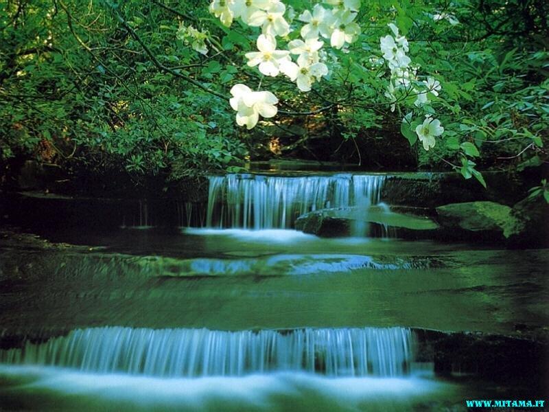 Guerriero della luce amo la natura for Immagini desktop natura