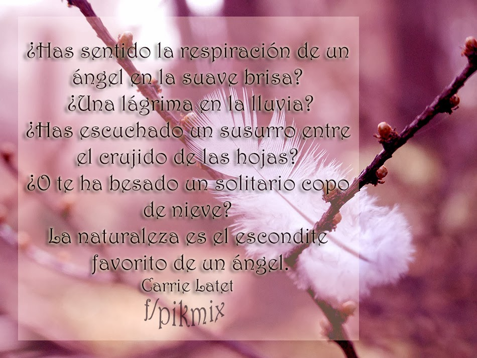El escondite de un angel ~  Frases ~ pluma, rama,