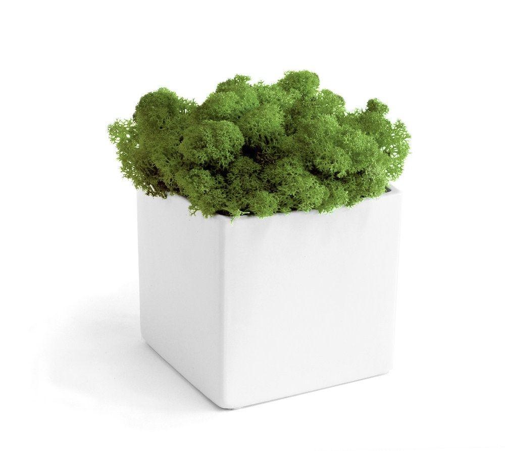 Couleurs et nuances le blog des accros de la d co les for Recherche sur les plantes vertes