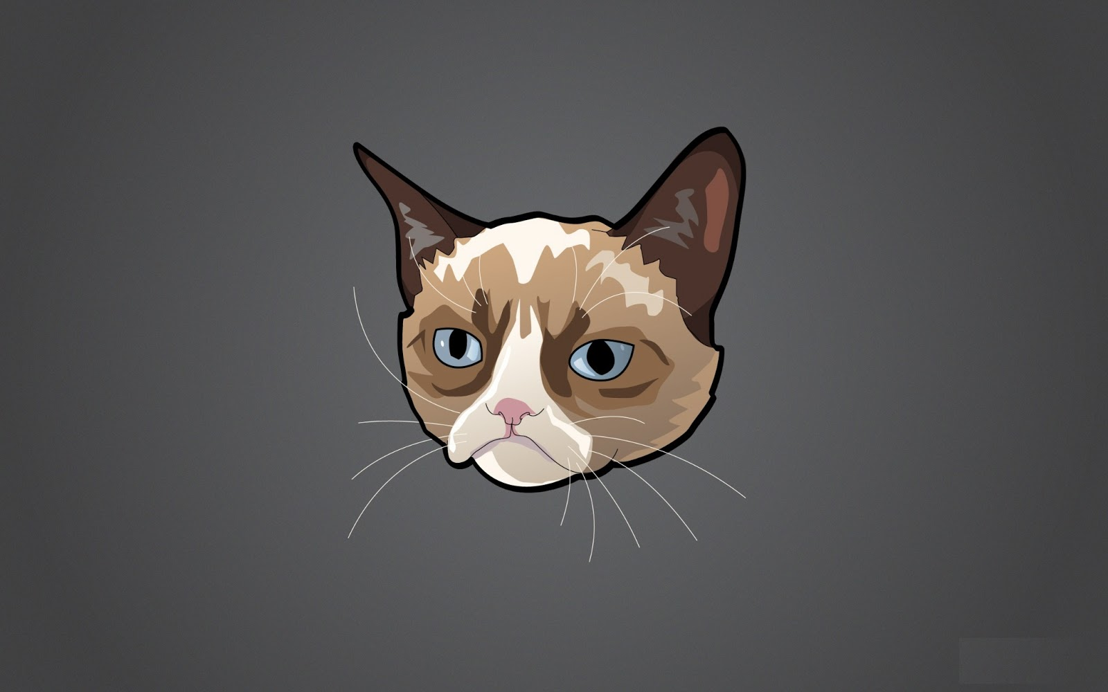grumpy cat hd wallpaper funny collection world