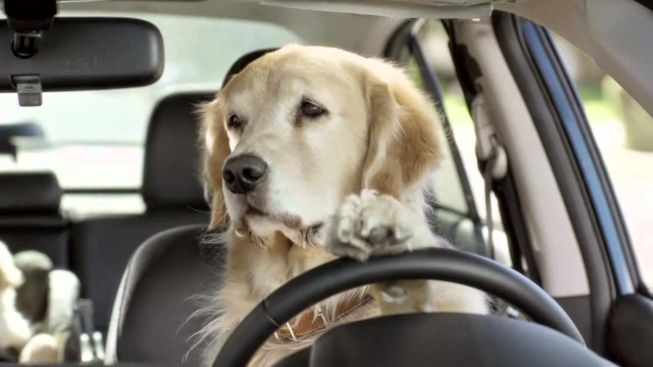 Helpful Tips for Traveling With a Pet