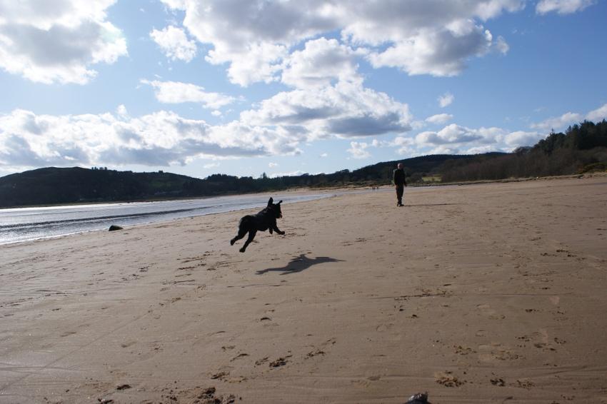 Is Portobello Beach Dog Friendly