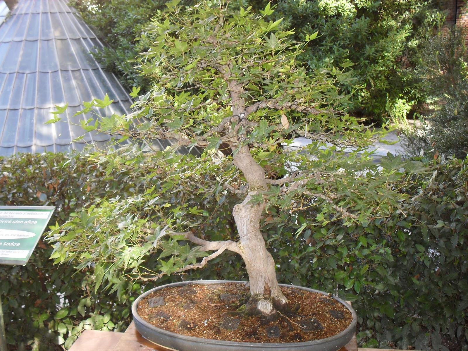Arte y jardiner a exposici n de bonsais en el jard n for Paginas de jardineria