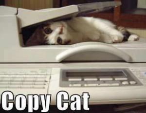 kucing garong, kucing gila