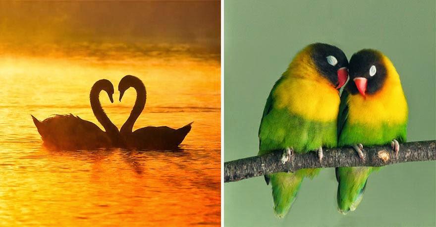 hechos interesantes sobre el amor