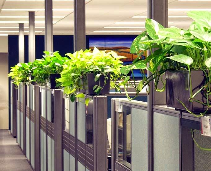 Oficina publica saludable plantas de interior resistentes - Plantas de interior resistentes ...