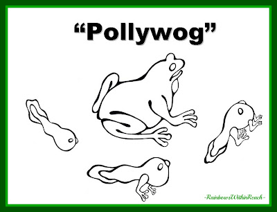"photo of: ""Pollywog"" Title Page: Metamorphosis from Tadpole to Frog"