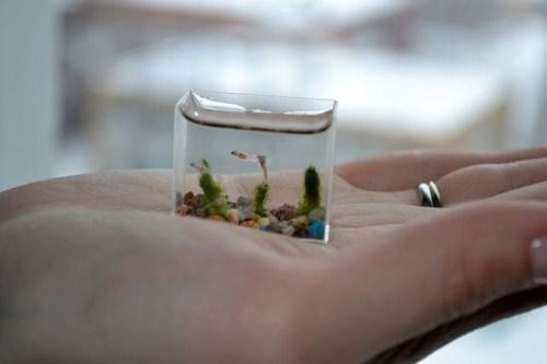 http://3.bp.blogspot.com/-r6xJMvs2t30/TWYZ72XZVJI/AAAAAAAAEuk/aWLLR0a8MpI/s640/Aquarium+%25284%2529.jpg
