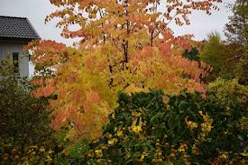 ..... såväl stora som små prydnadsträd och buskar...