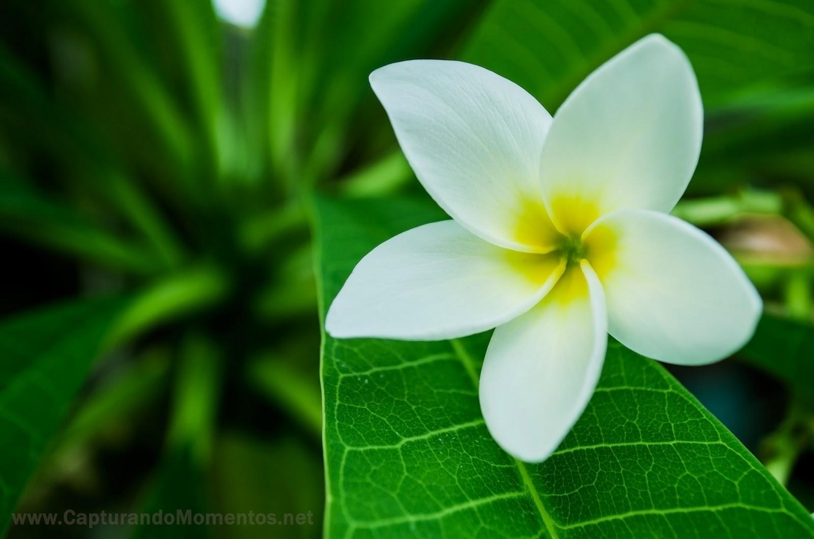 1 365 la flor de verano capturando momentos - Flores de verano ...