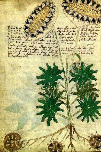 Girasoles Voynich
