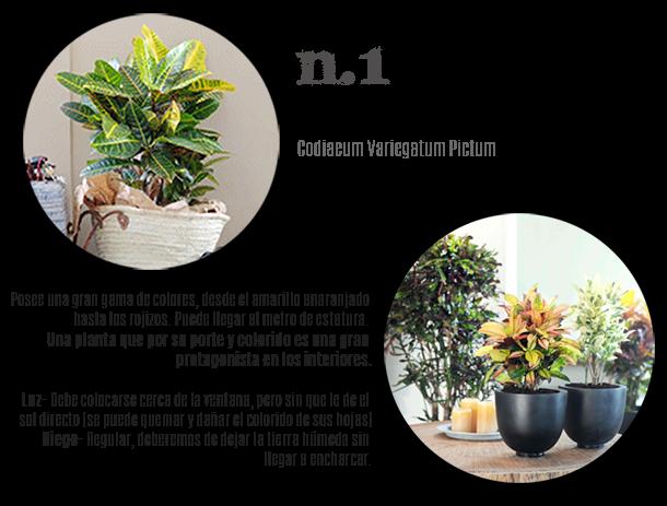 plantas interior resistentes, todo el año homepersonalshopper