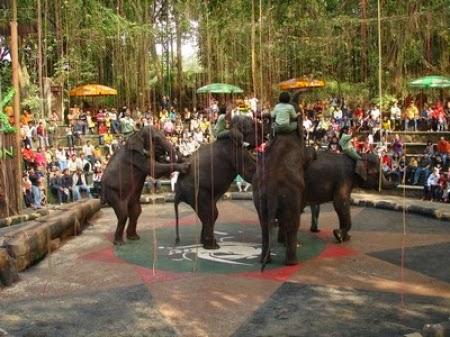 Tempat Wisata Pasuruan Taman Safari Prigen