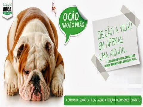 Leishmaniose - O Cão Não é o Vilão!
